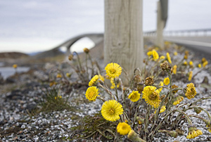 Spring flowers at The Atlantic Road